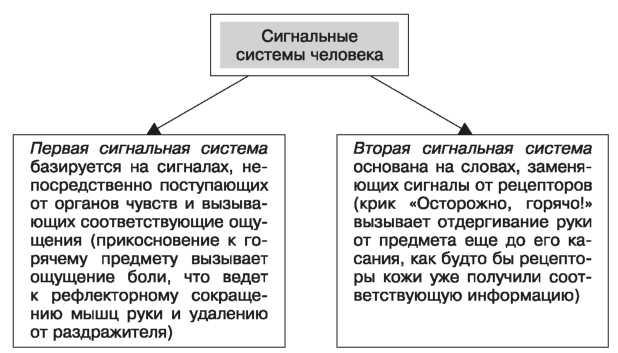 Развитие второй сигнальной системы связано