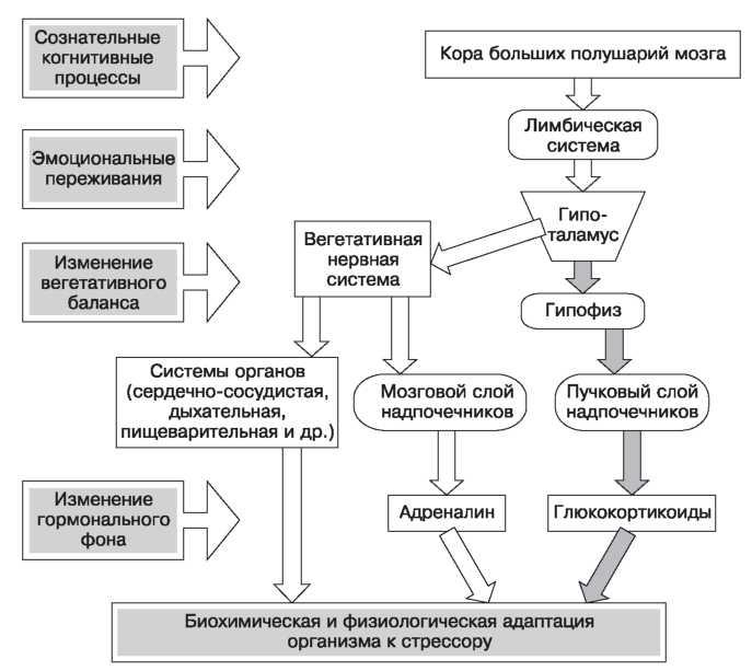 Лазебная ео посттравматическая стрессовая адаптация как системный  Дипломная работа психосоциальная помощь в реабилитации и адаптации участников вооруженных конфликтов